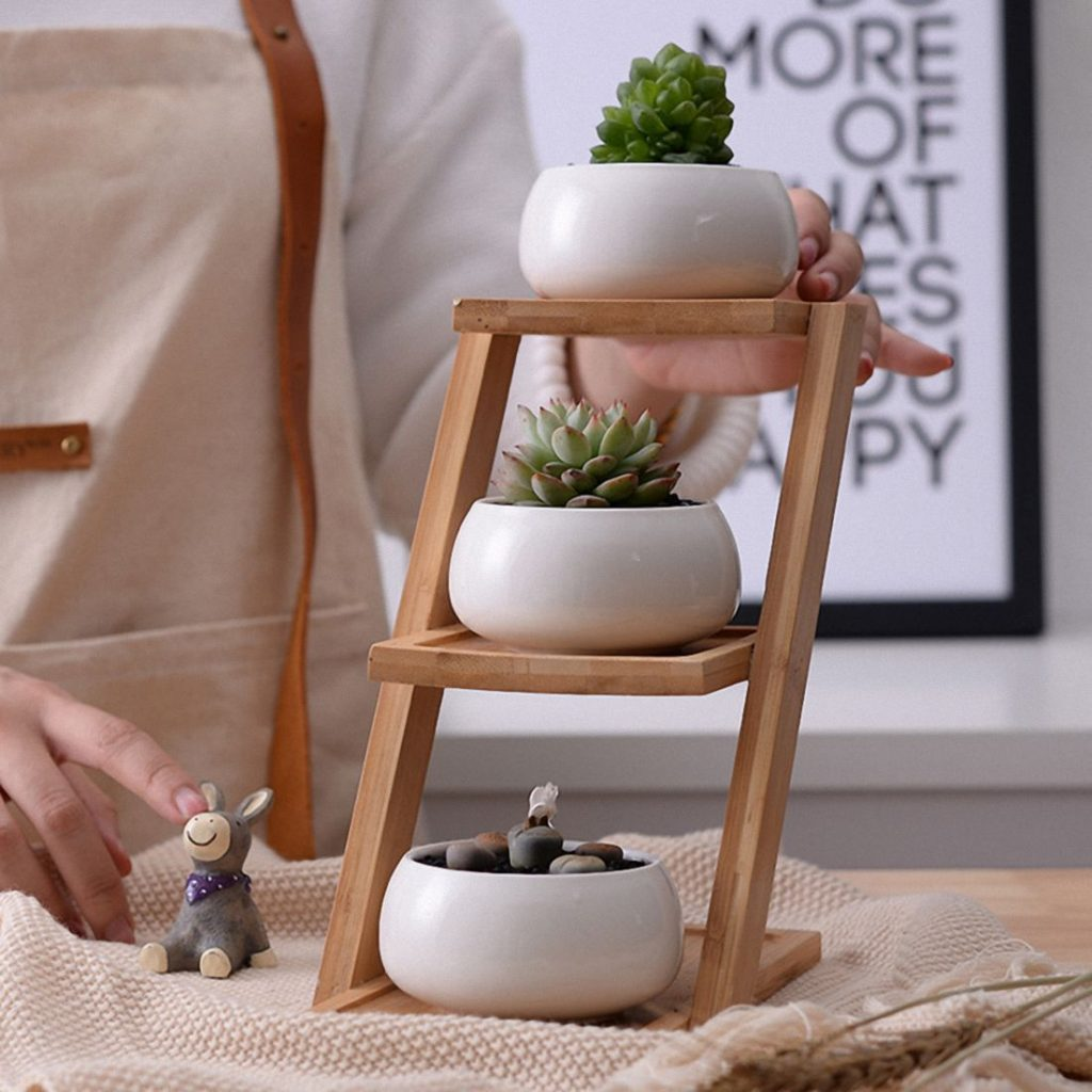 cacti plant stand