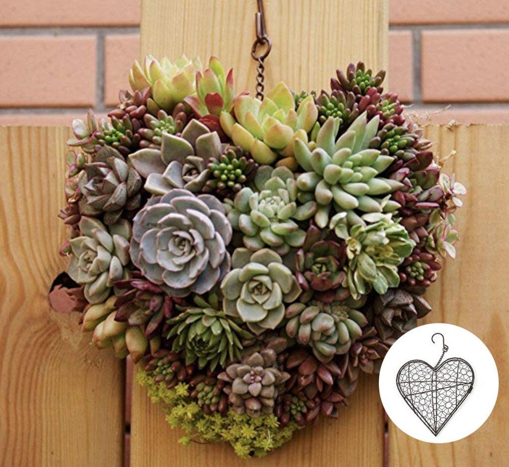 cactus heart planter