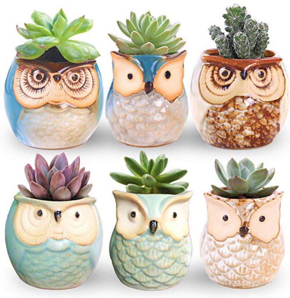 creative succulent pots owl