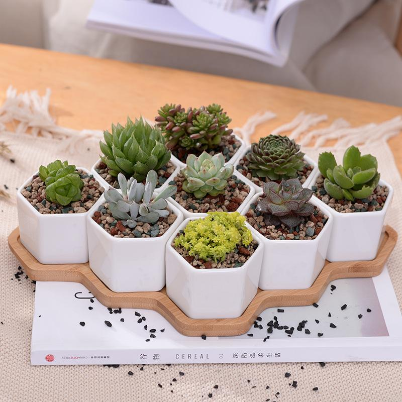 succulent planter pots with bamboo